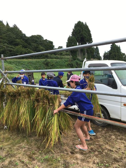 コイの田んぼの稲刈り2020_d0182179_20113318.jpg