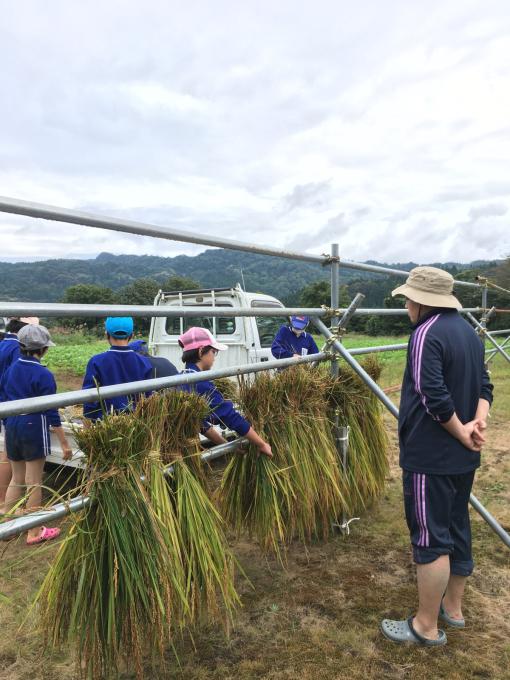 コイの田んぼの稲刈り2020_d0182179_20114709.jpg