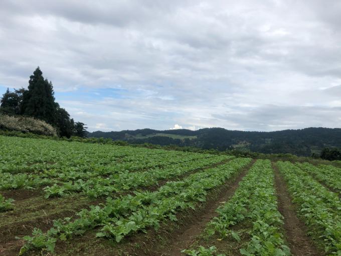 コイの田んぼの稲刈り2020_d0182179_20115905.jpg