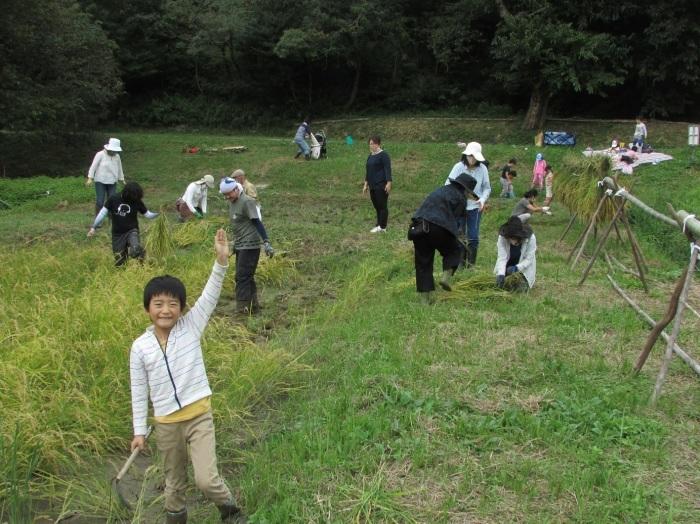 稲刈りをしました_b0175921_22013614.jpg