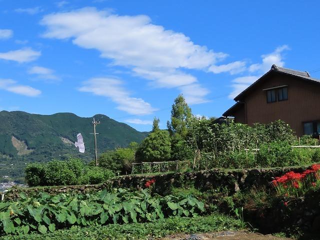 向井の棚田を散策(撮影:9月27日)_e0321325_15000262.jpg