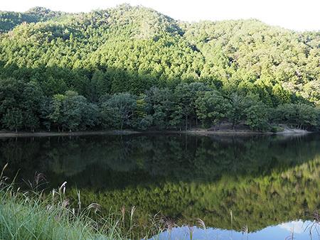 森のひとときへ_b0035072_12044054.jpg