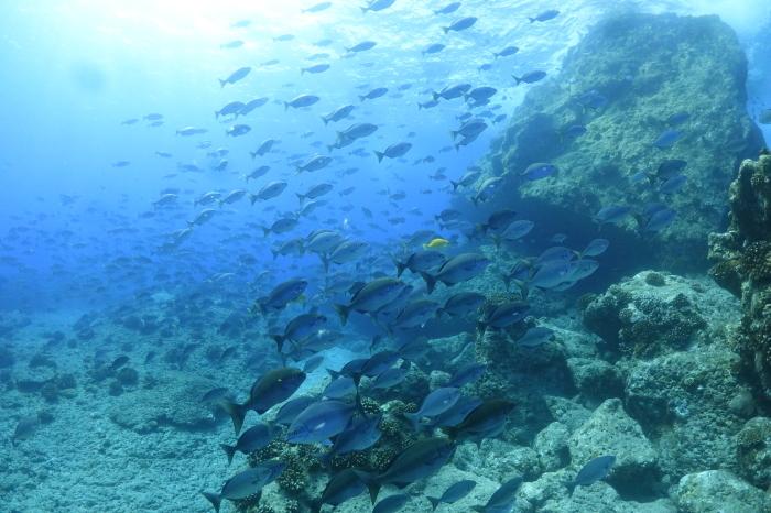 201004  島周りにて3DV(^^)/  水の青さは気持ちよい~_a0335173_17541664.jpg