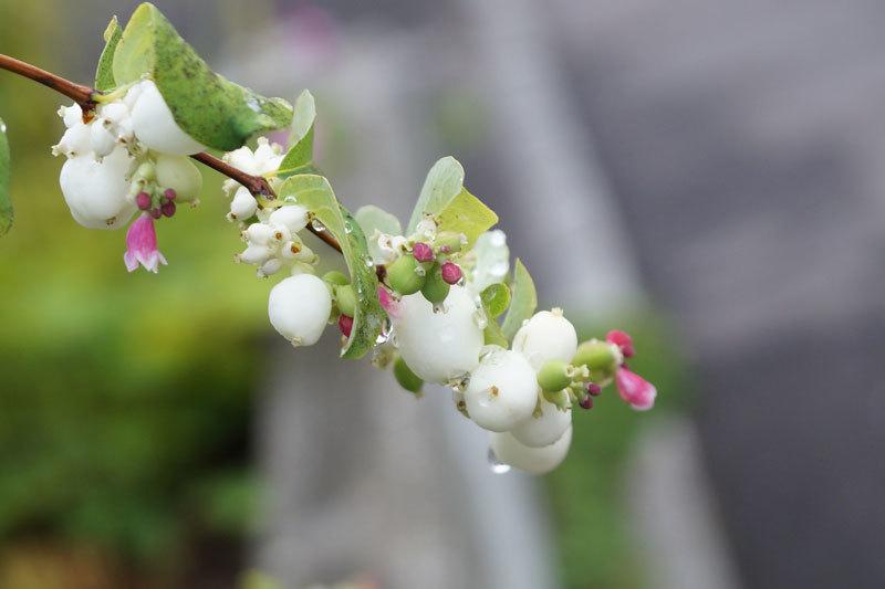 花の実_d0162994_08550727.jpg