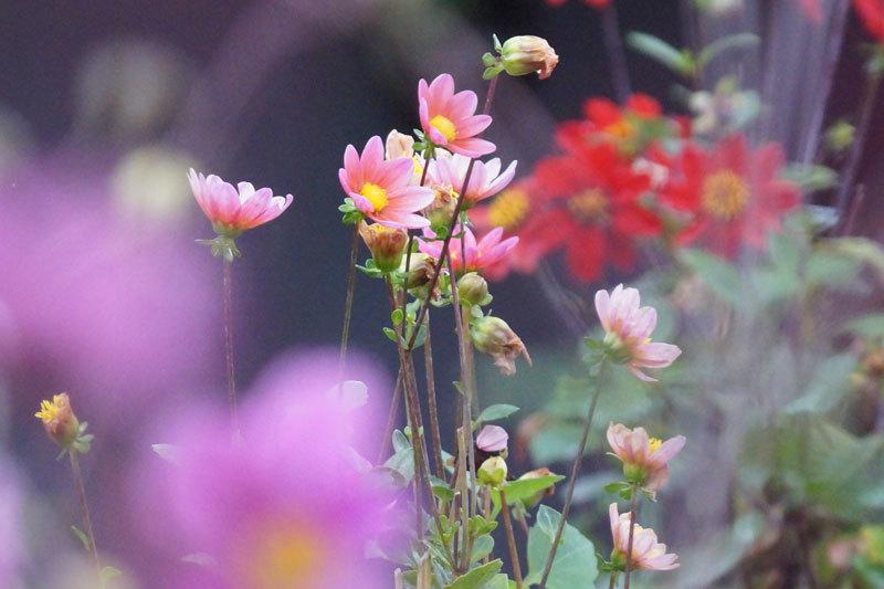 花・いろいろ_d0162994_19255596.jpg