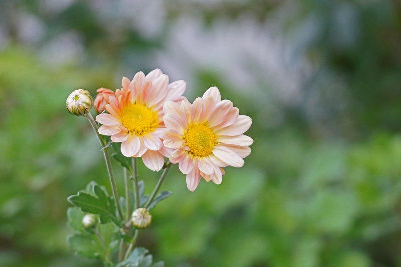 花・いろいろ_d0162994_19261095.jpg