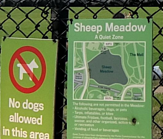 コロナ禍でも穏やかな秋のシープ・メドウ(Sheep Meadow)_b0007805_00594033.jpg