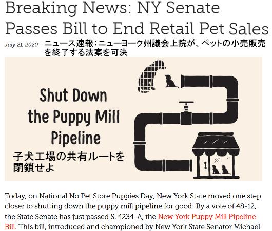 米国では、ペット・ショップでの犬や猫の販売禁止が拡大中_b0007805_22074993.jpg