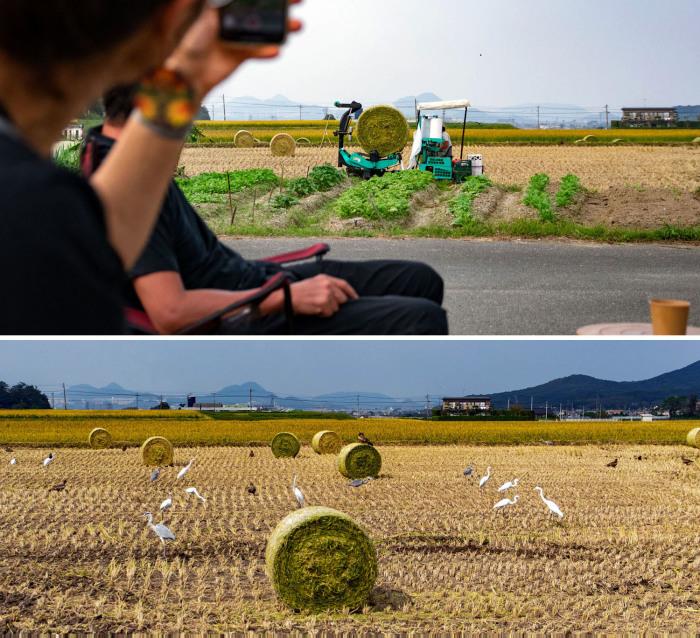 今年も畑で収穫祭。_b0340837_08380076.jpg