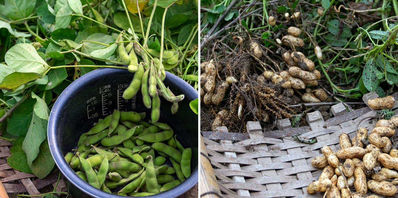今年も畑で収穫祭。_b0340837_08380078.jpg