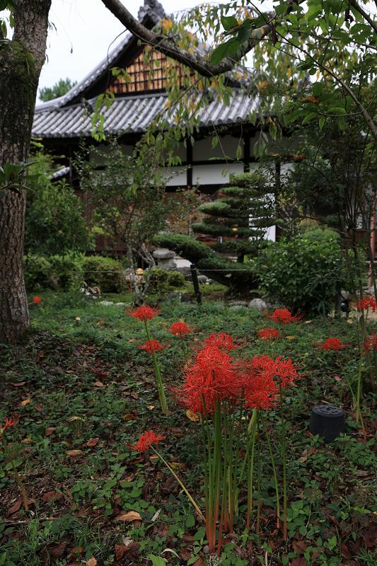 恵心院の彼岸花と秋の花々_f0155048_23404656.jpg