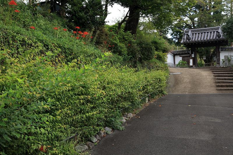恵心院の彼岸花と秋の花々_f0155048_23405773.jpg