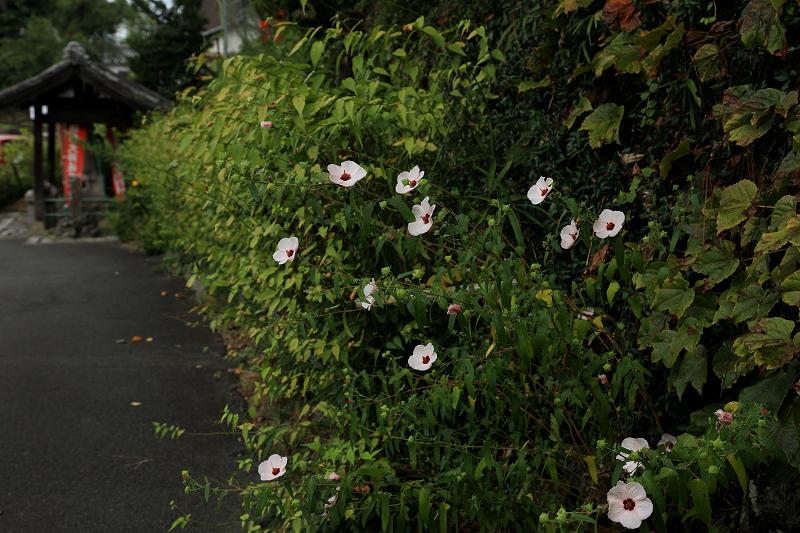 恵心院の彼岸花と秋の花々_f0155048_23431894.jpg