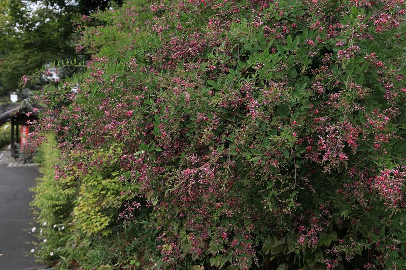 恵心院の彼岸花と秋の花々_f0155048_23433832.jpg