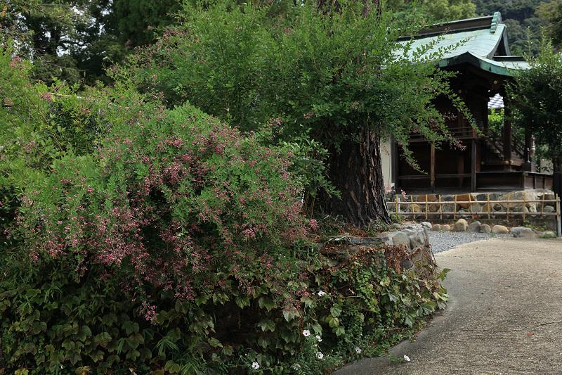 恵心院の彼岸花と秋の花々_f0155048_23434620.jpg