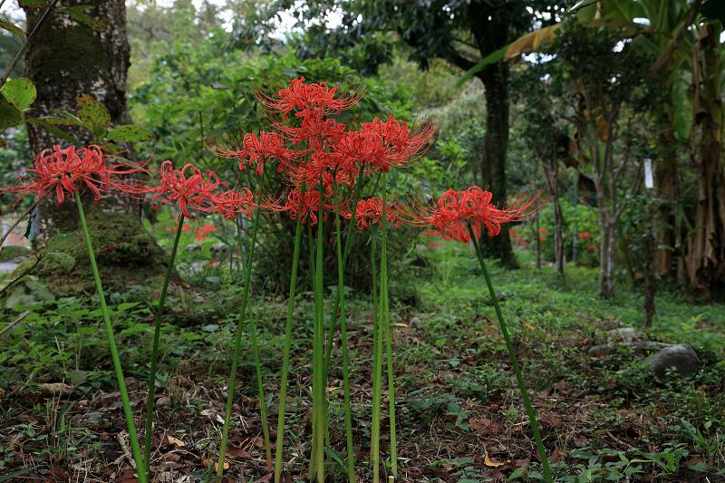 恵心院の彼岸花と秋の花々_f0155048_23435378.jpg