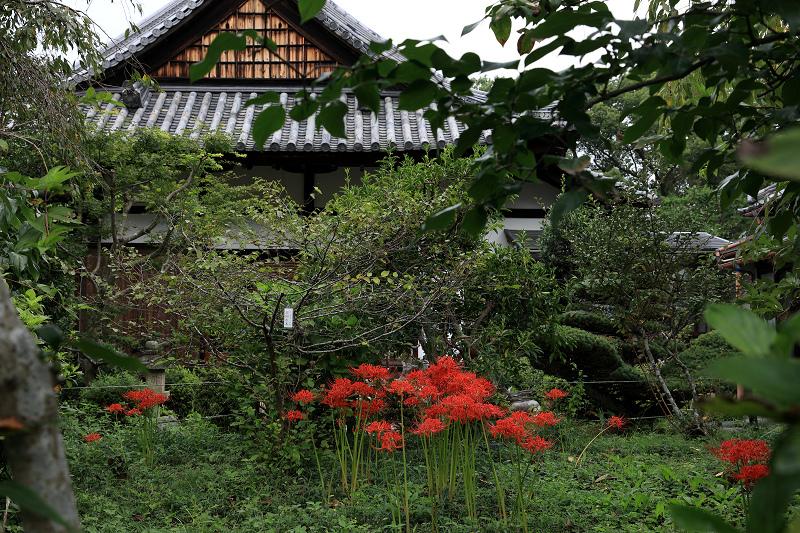 恵心院の彼岸花と秋の花々_f0155048_23435749.jpg