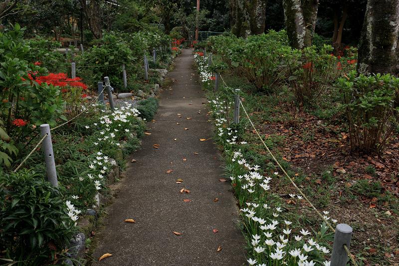 恵心院の彼岸花と秋の花々_f0155048_23440829.jpg