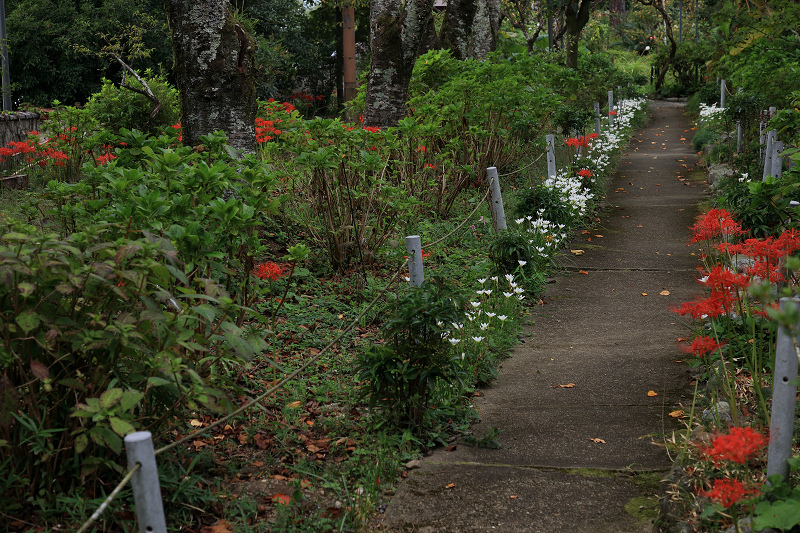 恵心院の彼岸花と秋の花々_f0155048_23442897.jpg