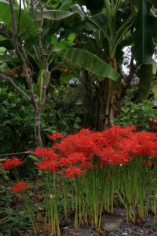 恵心院の彼岸花と秋の花々_f0155048_23444520.jpg