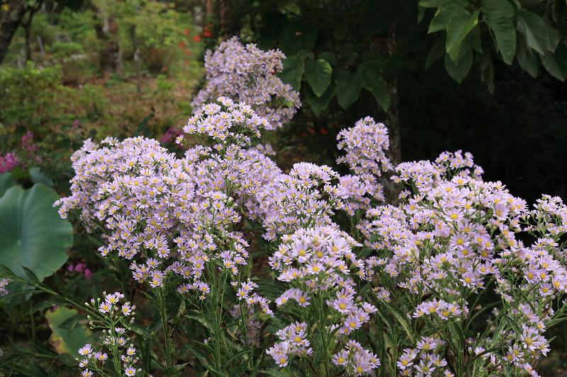 恵心院の彼岸花と秋の花々_f0155048_23455447.jpg