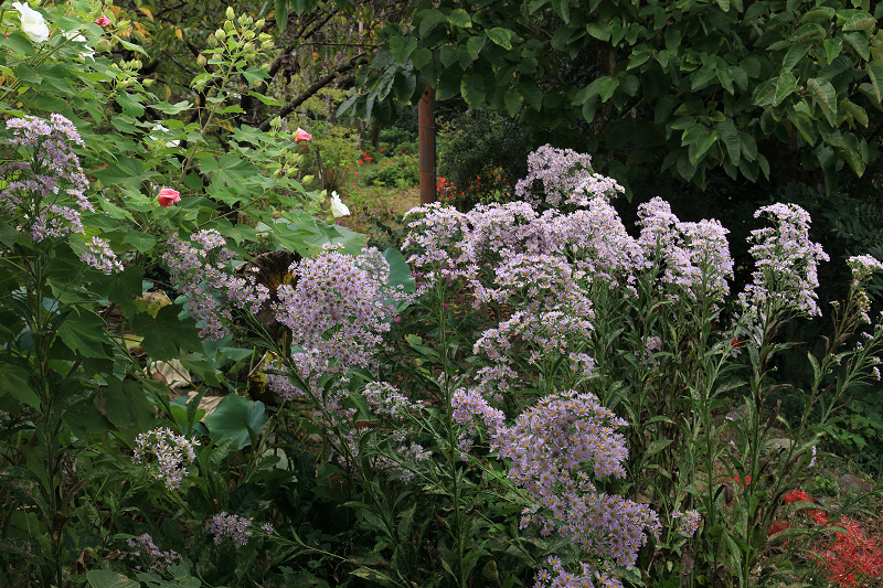 恵心院の彼岸花と秋の花々_f0155048_23460316.jpg