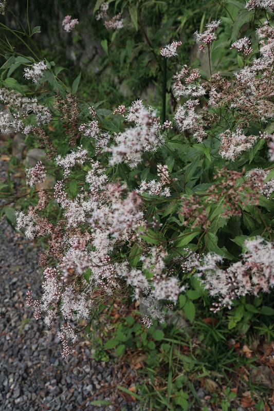 恵心院の彼岸花と秋の花々_f0155048_23462388.jpg