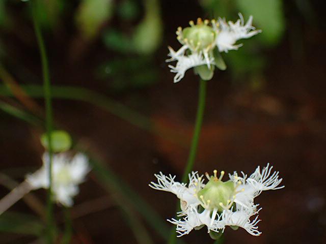 八幡湿原の花①*霧ヶ谷湿原の外れ*_f0214649_04234902.jpg