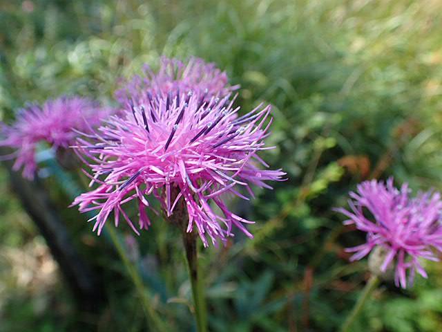 八幡湿原の花①*霧ヶ谷湿原の外れ*_f0214649_04263539.jpg