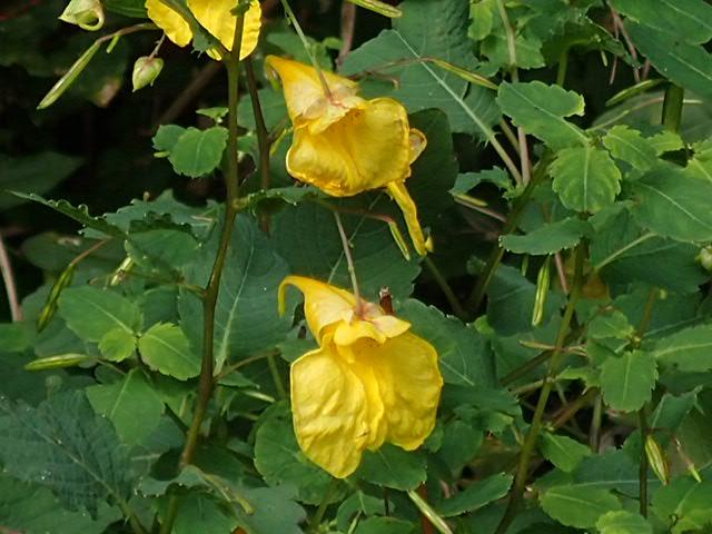 八幡湿原の花①*霧ヶ谷湿原の外れ*_f0214649_04394957.jpg