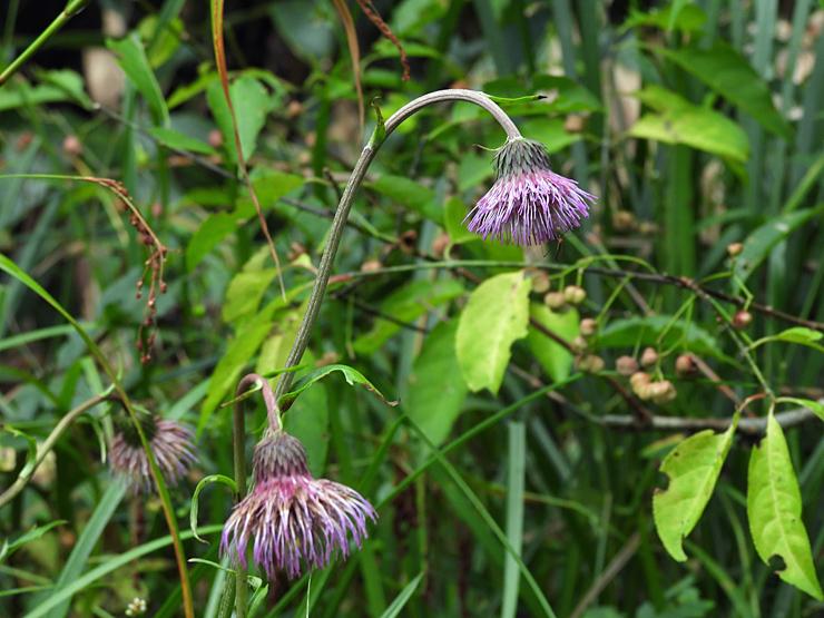 八幡湿原の花①*霧ヶ谷湿原の外れ*_f0214649_04502450.jpg
