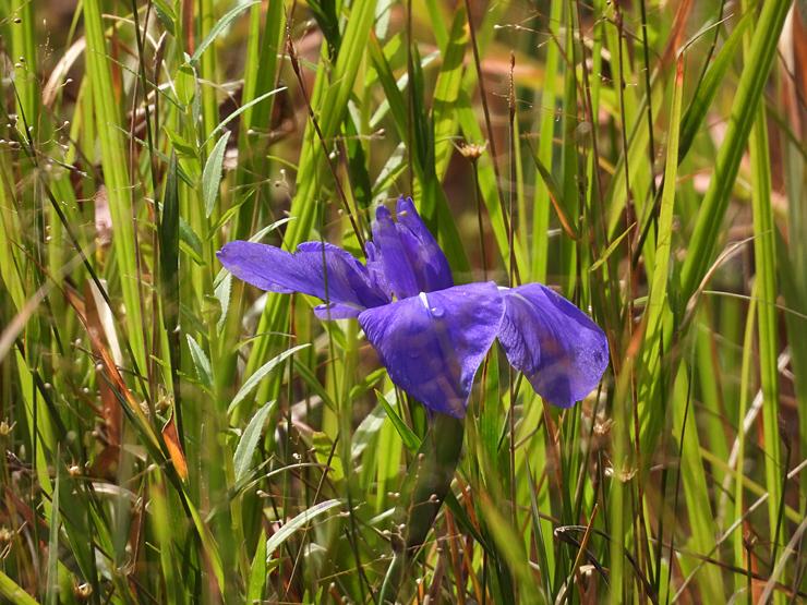 八幡湿原の花①*霧ヶ谷湿原の外れ*_f0214649_04503819.jpg