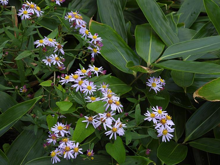 八幡湿原の花①*霧ヶ谷湿原の外れ*_f0214649_04505504.jpg