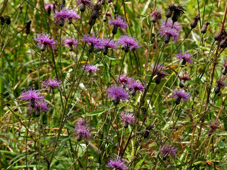 八幡湿原の花①*霧ヶ谷湿原の外れ*_f0214649_04511624.jpg