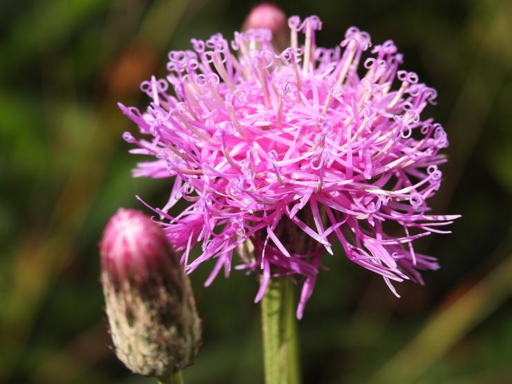 八幡湿原の花①*霧ヶ谷湿原の外れ*_f0214649_04512392.jpg