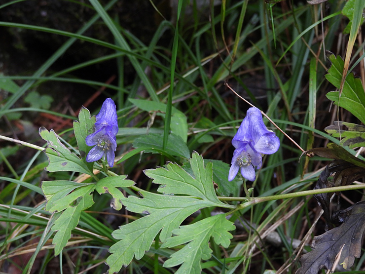 八幡湿原の花①*霧ヶ谷湿原の外れ*_f0214649_04513435.jpg