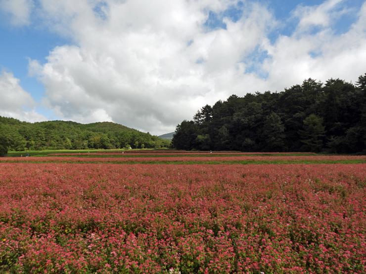 八幡湿原②*霧ヶ谷湿原*_f0214649_16283024.jpg