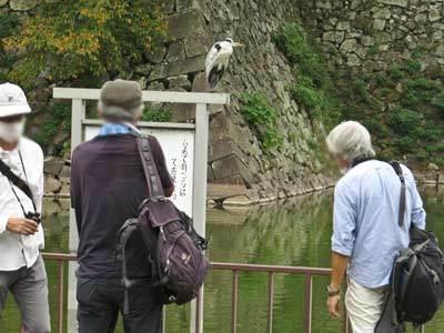 \'20年10月名城公園探鳥会_f0160773_10310106.jpg
