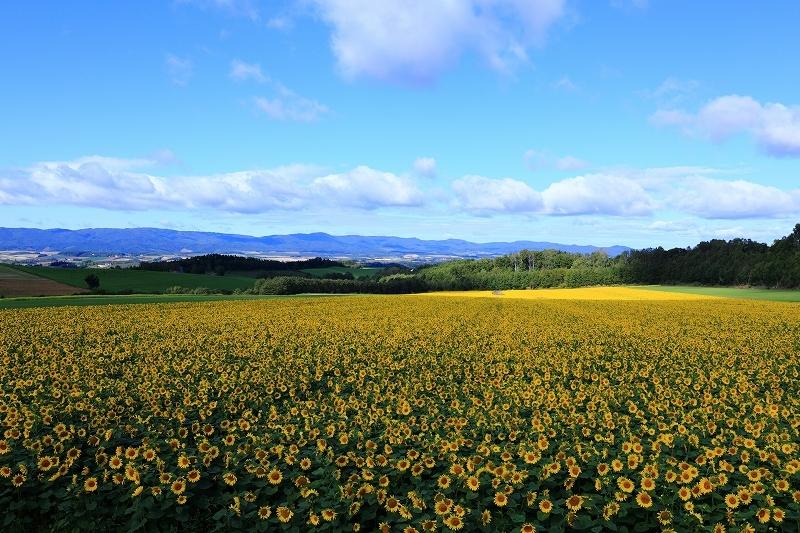 素晴らしき丘の風景 9月28日 5/5_e0405576_03501246.jpg