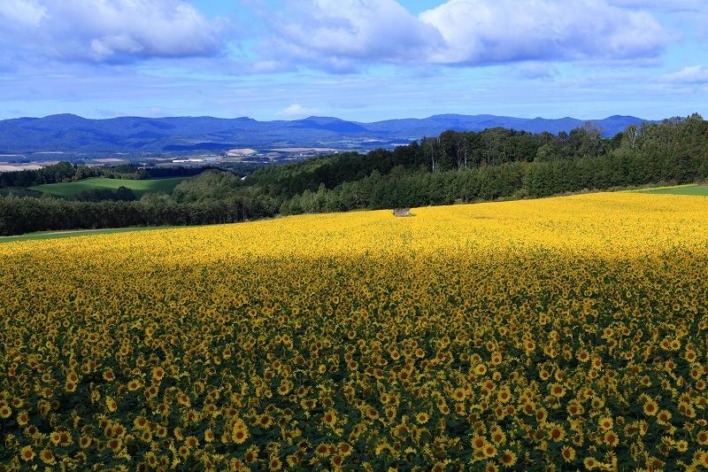 素晴らしき丘の風景 9月28日 5/5_e0405576_03502361.jpg