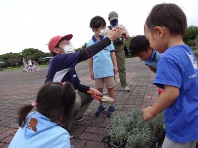 富浜緑地に花壇ができました!_d0338682_12484857.jpg