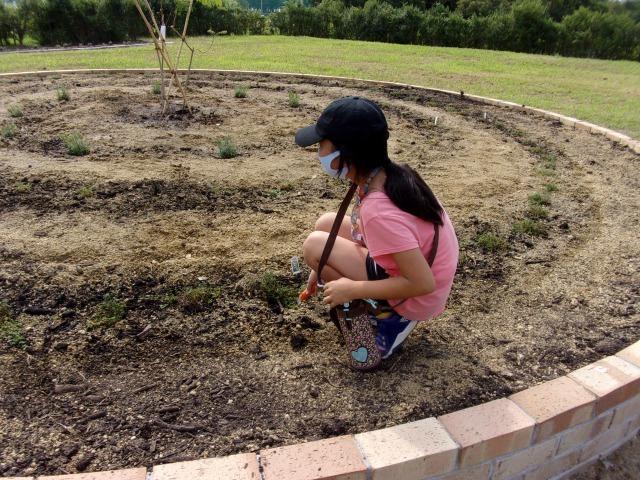 富浜緑地に花壇ができました!_d0338682_12493384.jpg