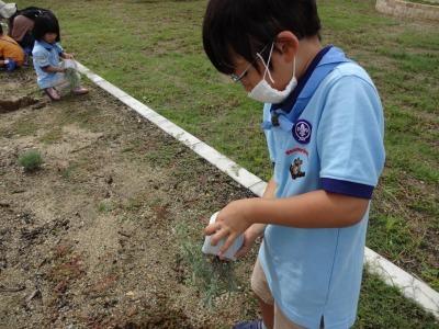 富浜緑地に花壇ができました!_d0338682_12502461.jpg
