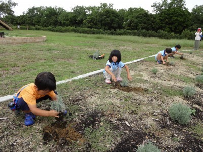 富浜緑地に花壇ができました!_d0338682_12504104.jpg