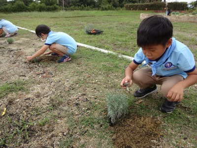 富浜緑地に花壇ができました!_d0338682_12511301.jpg
