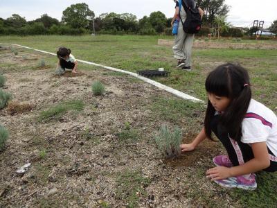 富浜緑地に花壇ができました!_d0338682_12521656.jpg