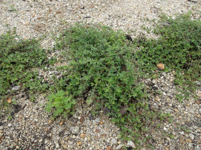 富浜緑地に花壇ができました!_d0338682_12535426.jpg
