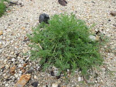 富浜緑地に花壇ができました!_d0338682_12544073.jpg
