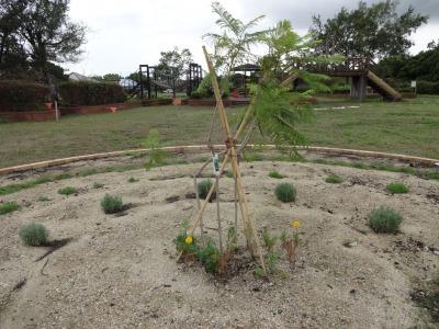 富浜緑地に花壇ができました!_d0338682_12553020.jpg