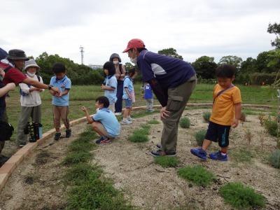 富浜緑地に花壇ができました!_d0338682_13002570.jpg
